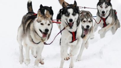 Husky business: Sled-dog racing in Russia's capital