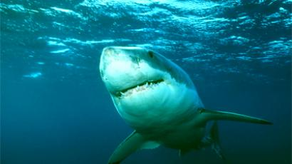 White shark (photo from http://natgeotv.com)