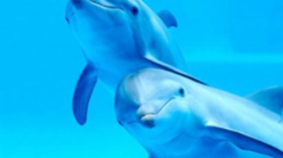 Ukrainian ecologists ask president to grant citizenship to dolphins