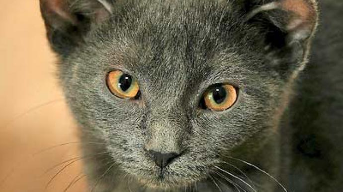 Professor Eyes Breeding Four Eared Cat Rt News