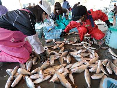 Radioactive cesium found in Japan's fish, seawater