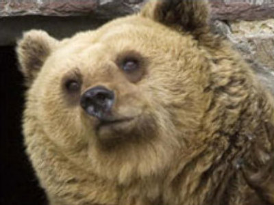 Romania:  Bear mauls U.S. tourists, 1 dead (CNN.com)