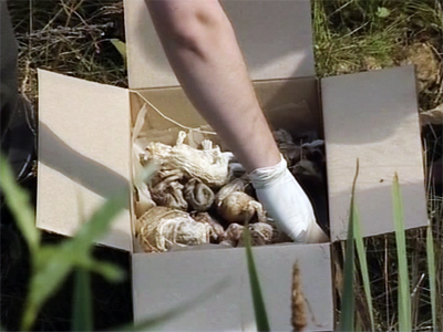 Shock discovery: 248 human fetuses found trashed in Russian forest (GRAPHIC PHOTOS)