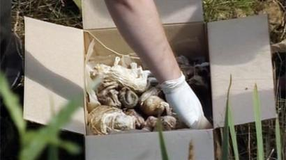 Up to 250 human fetuses found trashed in Russian forest (Still from NTV coverage video)