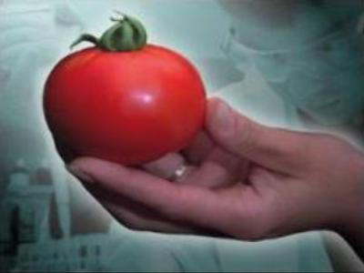 Russia to start labelling GM foods
