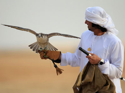Wings of a scandal: Saudi princes stopped trying to take rare falcons out of Russia