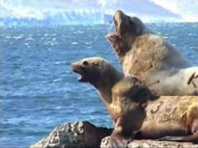 Sea lions enjoy friendly welcome in Far East