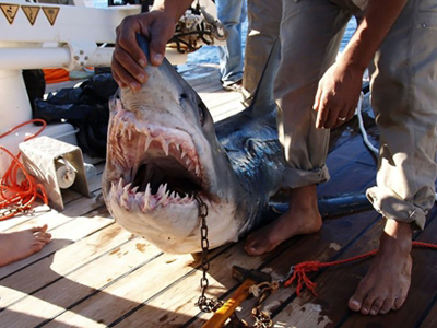 Shark kills German tourist in Egypt