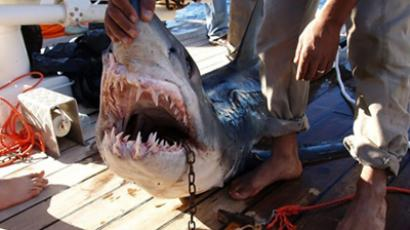 Jaws 2.0: Freak shark attacks in Russia's Far East