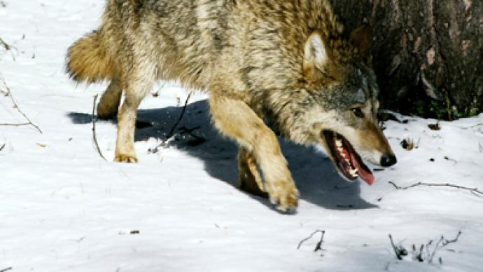 State Of Emergency In Siberia Russian Republic To Hunt