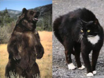 Those incredible cats! (metacafe.com)