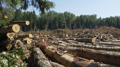 Khimki forest felling begins in the vicinity of the Sheremetyevo airport (RIA Novosti/Alexander Vilf)