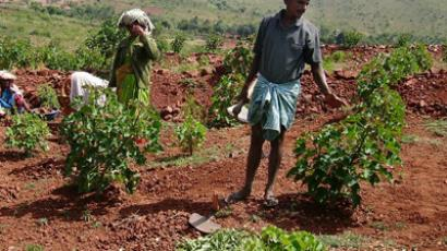 Indian labourers work in a field of Jatropha in the village of Hassan, some 250 kms from Bangalore. Jatropha, a wild shrub that grows abundantly across India, has been hailed as an eco-friendly solution to the energy needs. (AFP Photo / Mission Biofuels India)