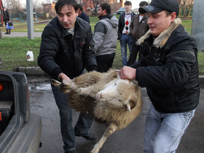Violence of the lambs: Animal sacrifice ban sought in reply to Innocence of Muslims ruling