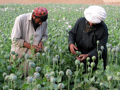 Afghan farmers work on a poppy field in the Grishk district of Helmand province (Reuters / Abdul Qodus / Files)