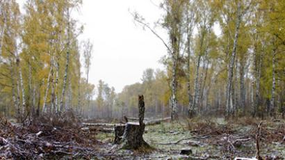 The Khimki Forest (RIA Novosti / Anton Denisov)