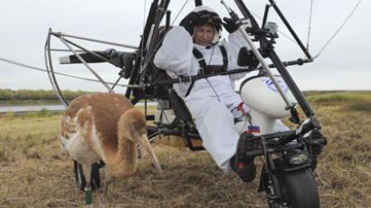 "Russian President Vladimir Putin takes part in a scientific experiment as part of the ""Flight of Hope"", which aims to preserve a rare species of - cranes, by showing the nursery-reared birds their flying route. At the helm of a motorized hang glider that the birds have taken as their leader, Putin made three flights - the first to get familiar with the process, and two others with the birds.(RIA Novosti / Alexsey Druginyn)"