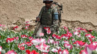 An Afghan army soldier walks through a poppy field in the Maiwand district in Kandahar province, southern Afghanistan April 7, 2012 (Reuters/Baz Ratner)