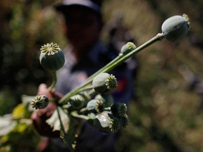 Russia nets major drug haul in 2012