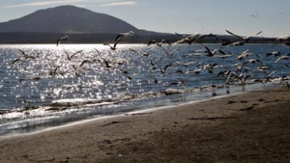 Gulls on the shore of South Kuril Bay on the island of Kunashir in the Kuril chain. (RIA Novosti / Sergey Krasnouhov)