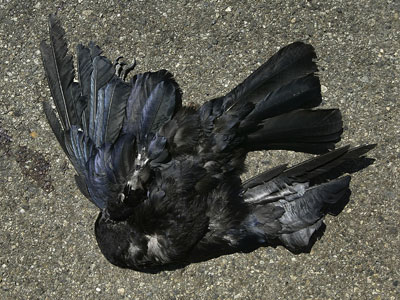Dead birds fall on New Jersey scaring residents