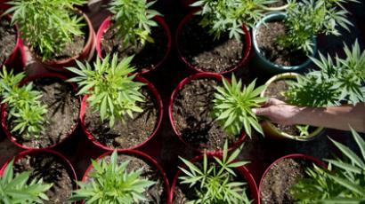 Feds ban legal marijuana growers from using government water supply