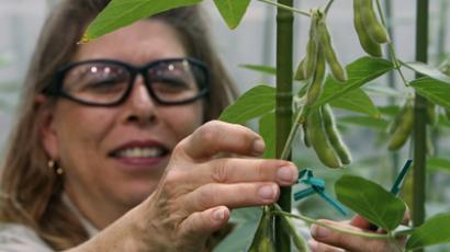 Soybean Plant Specialist Nancy Brumley ties up a soybean stalk in the soybean greenhouse at the Monsanto Research facility in Chesterfield, Missouri  (Monsanto Reuters/Peter Newcomb)