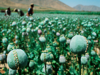 Russia fights opium war as US marks 8 years in Afghanistan