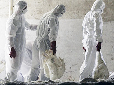 Bird flu mutation study stopped in fear of deadly global outbreak