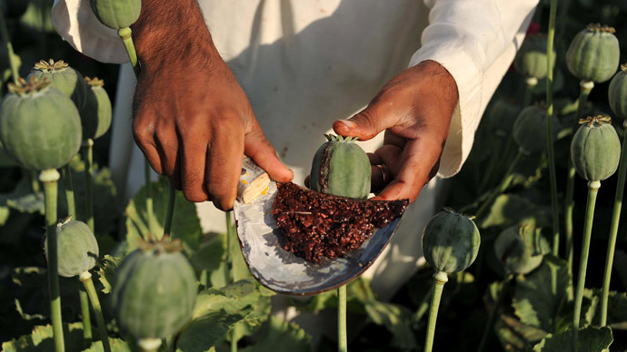 An Afghan farmer collects raw opium as he works in a poppy field in Khogyani District of Nangarhar province on April 29, 2013. (AFP Photo)