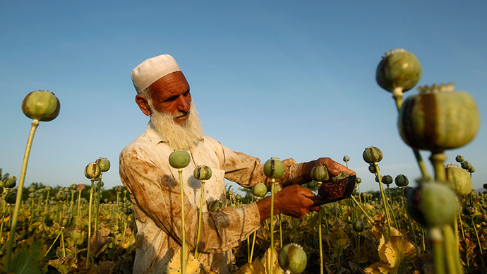 An Afghan man works on a poppy field in Jalalabad province (Reuters)