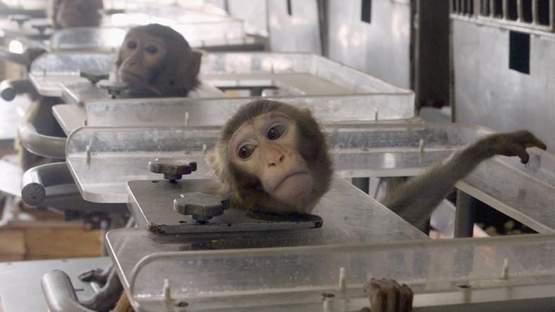 Des singes forcés d'inhaler des gaz d'échappement : Volkswagen présente ses excuses pour son test