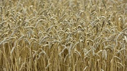 Польша оценила ущерб фермерских хозяйств от засухи в $1 млрд