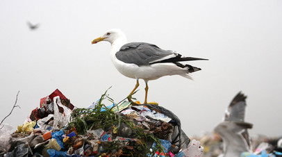 В Оренбургской области планируют ликвидировать крупный полигон отходов