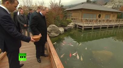 Путин в Ялте покормил карпов