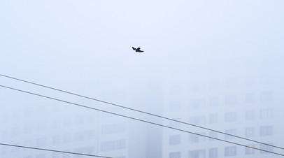 Жителей Москвы предупредили о плохой видимости из-за тумана 10 декабря