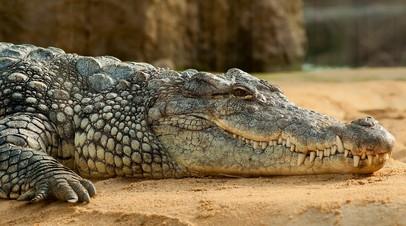 Мужчина попытался провезти из Мексики в Россию 30 крокодилов в багаже