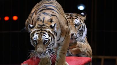 В России предложили запретить посещать цирки несовершеннолетним