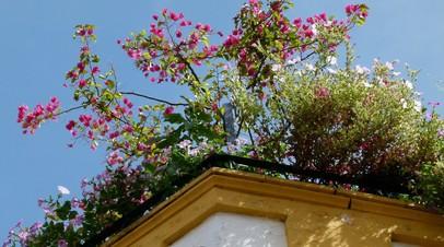 СМИ: Федеральный ГОСТ для озеленения крыш могут утвердить летом 2019 года