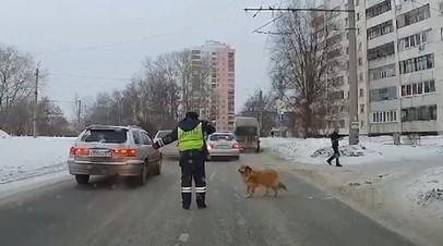 Челябинский полицейский помог хромой собаке перейти дорогу — видео