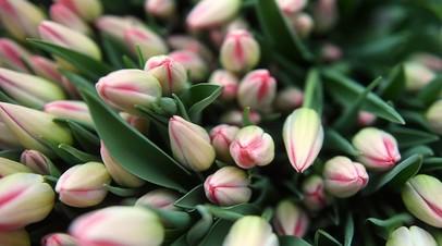 Посетительницам Музея Победы подарили тысячу тюльпанов на 8 Марта